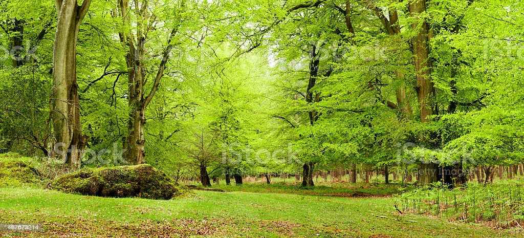 New Forest stock photo