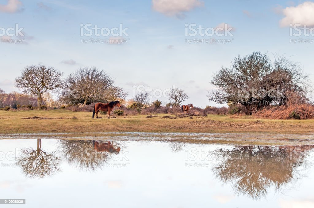 New Forest Reflections stock photo