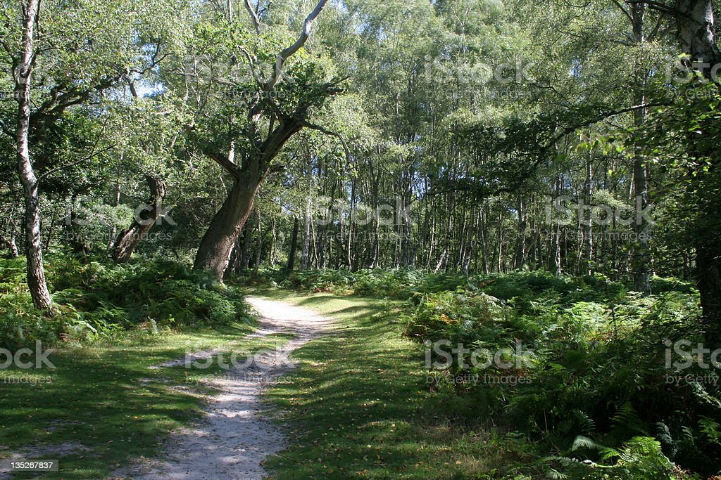 New Forest Walk I stock photo