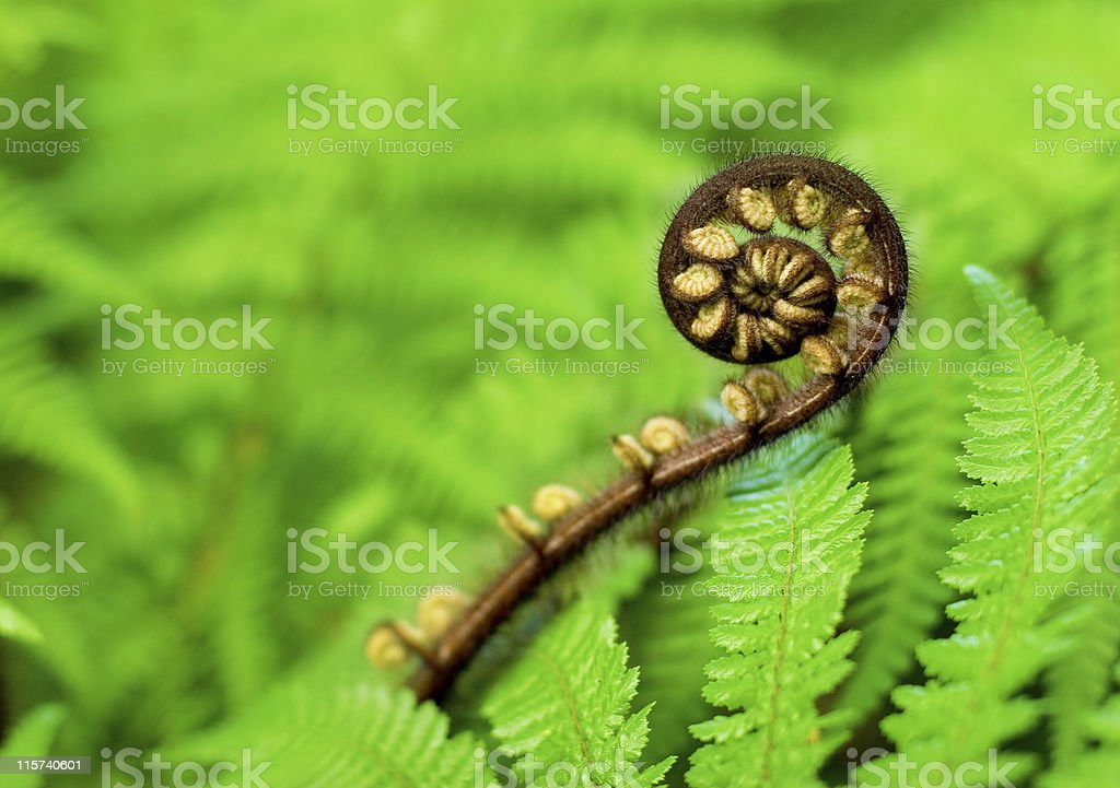 New Frond stock photo