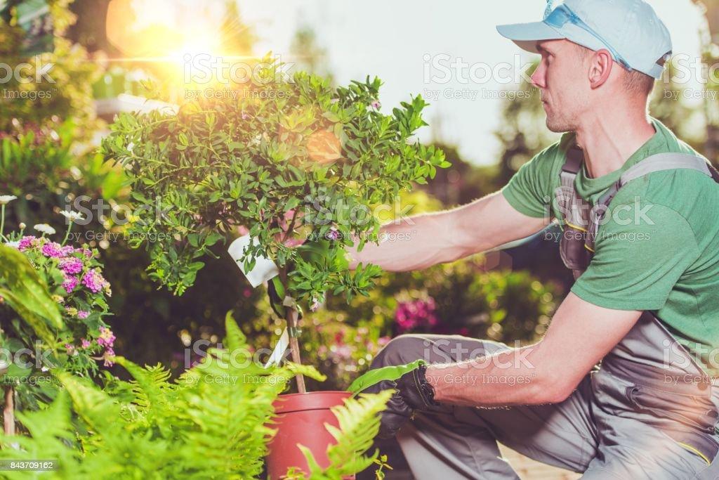 Nuevas plantas de jardín compra - foto de stock