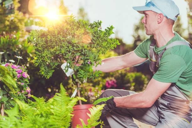 new garden plants buying - giardinaggio foto e immagini stock