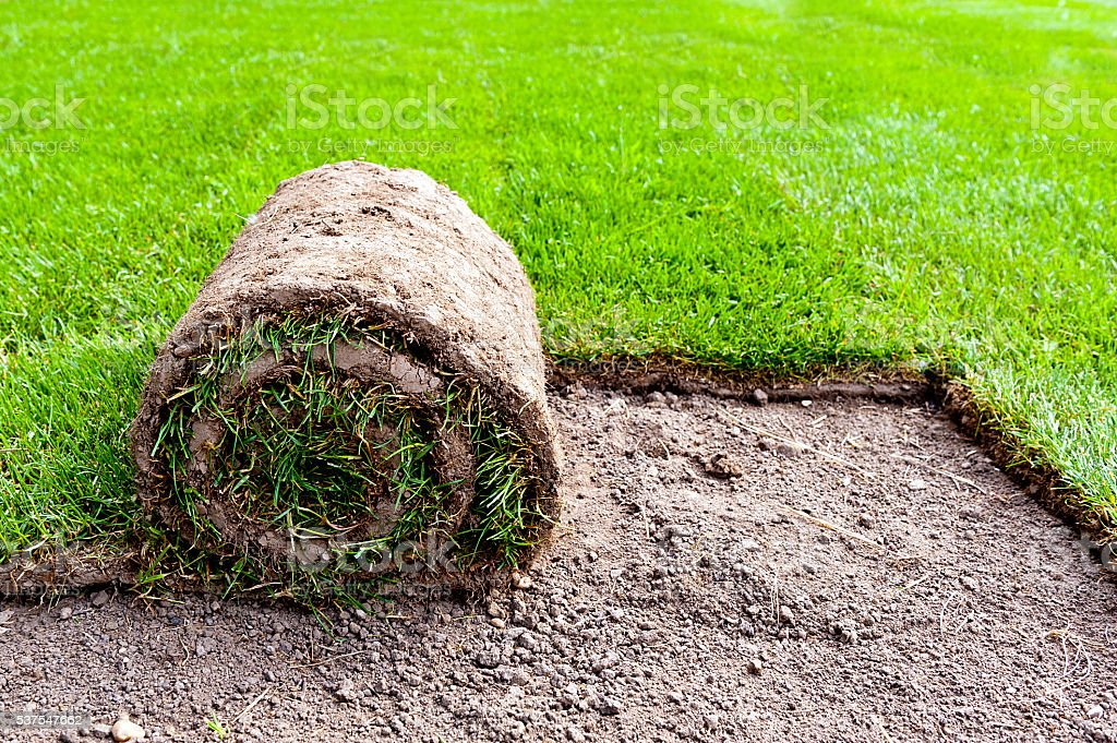 new grass stock photo