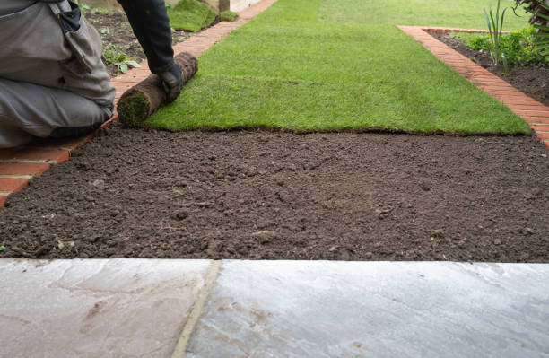 New grass turf being installed in a garden along new brick edging. stock photo