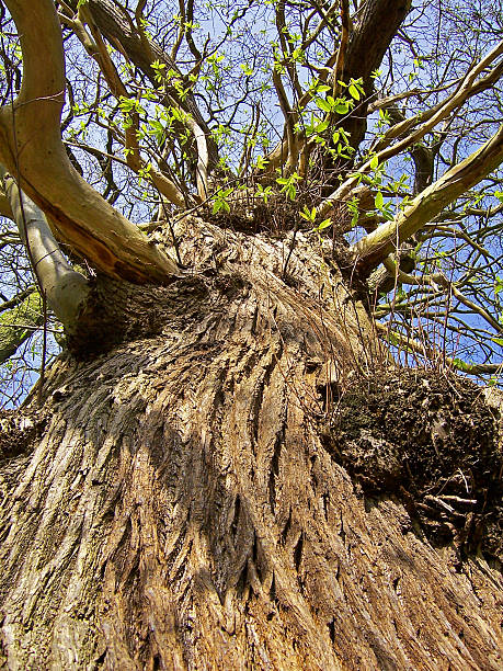 New growth on old tree stock photo