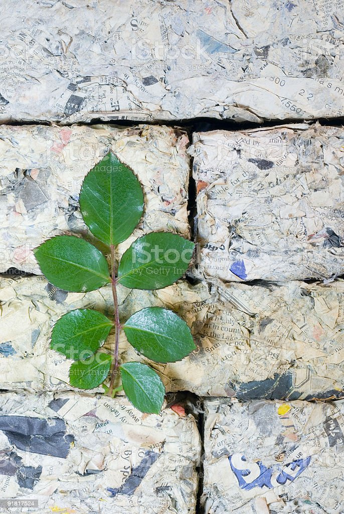 New growth - recycling paper royalty-free stock photo