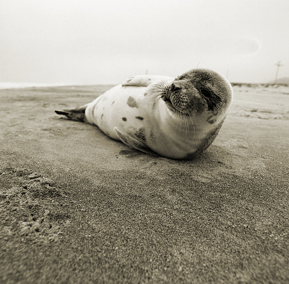 A seal on the Jersey shore. And no, I don't remember what exit. :)