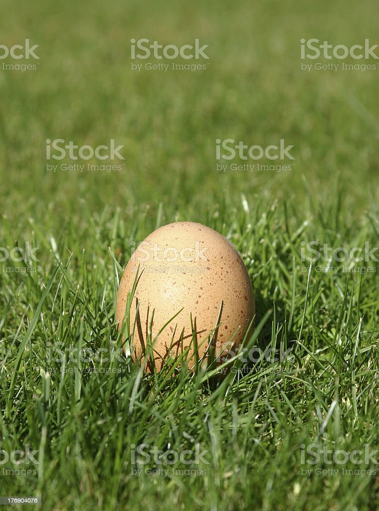 New Laid Egg royalty-free stock photo