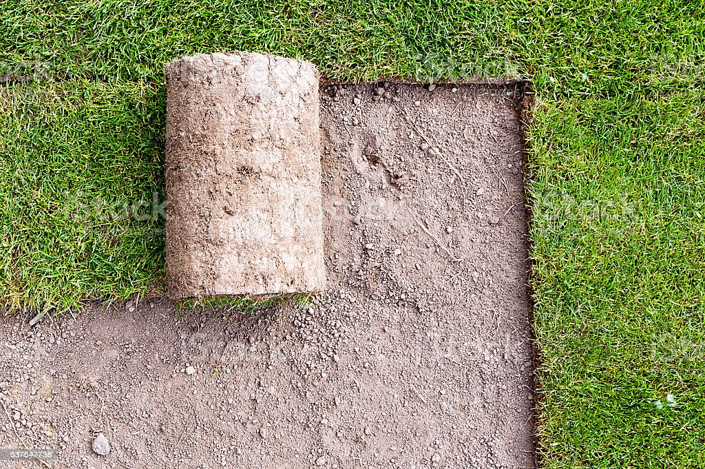 new lawn stock photo