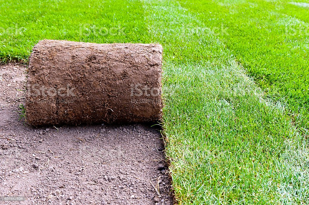 new lawn roll stock photo