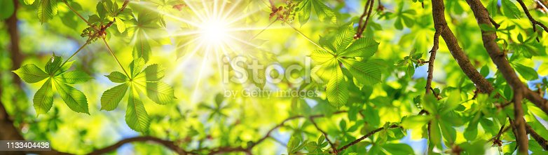 istock New leaves in summer 1133404438