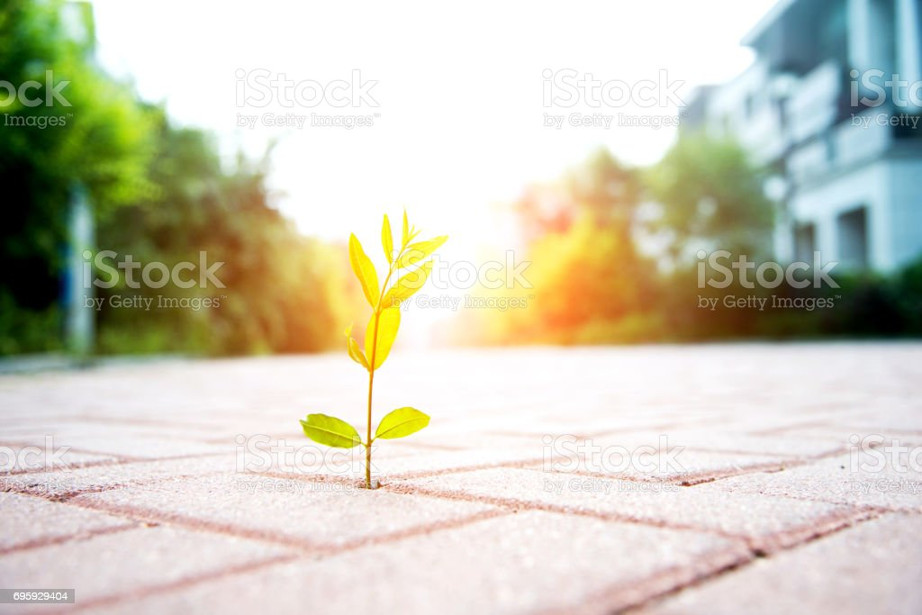 New life come from tiled floor stock photo