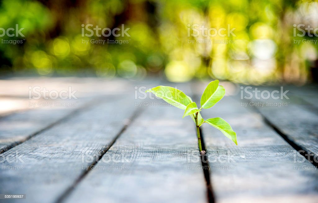 Young plant come from the wood plank.