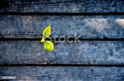 istock new life come from wood plan 535195947