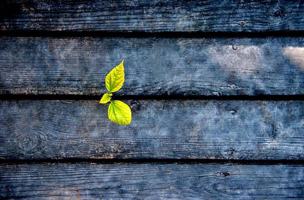 Nueva vida desde plan de madera - foto de stock