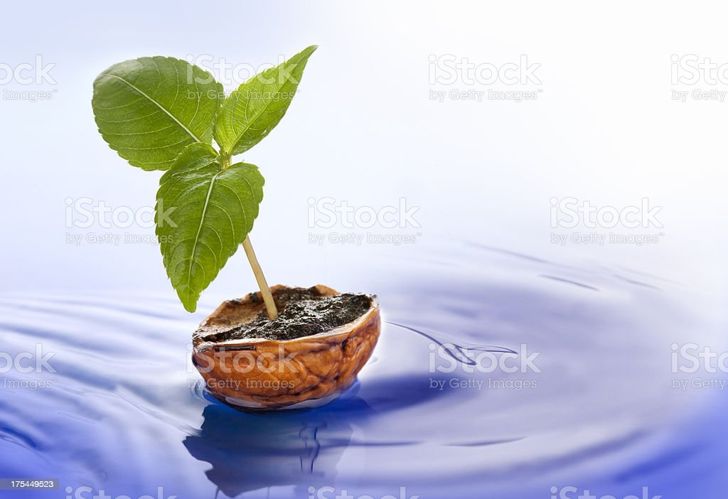 New life concept royalty-free stock photo