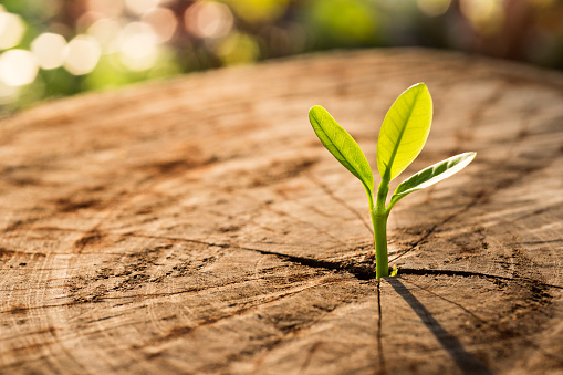 istock New Life concept with seedling growing sprout (tree) 641523960