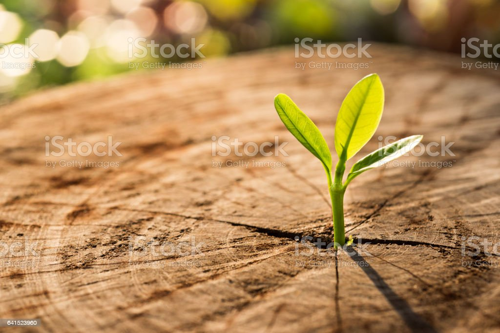 New Life concept with seedling growing sprout (tree) stock photo