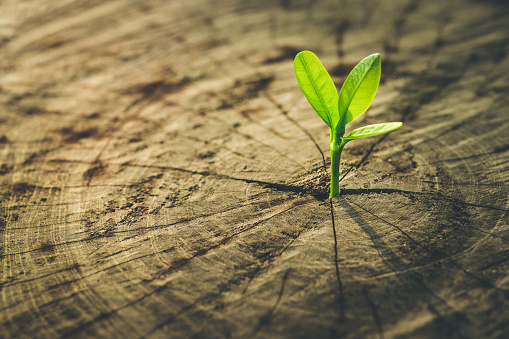 istock New Life concept with seedling growing.business development. 641523152