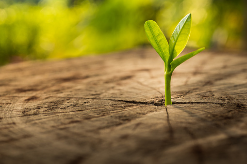 New Life concept with seedling growing.business development.