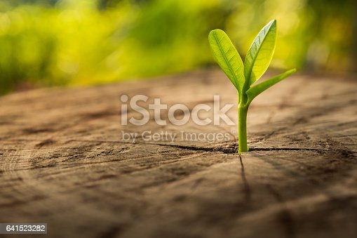 istock New Life concept with seedling growing.business development. 641523282