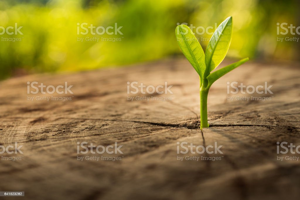 New Life concept with seedling growing.business development. stock photo