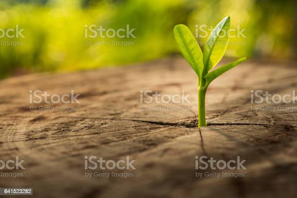 Photo of New Life concept with seedling growing.business development.