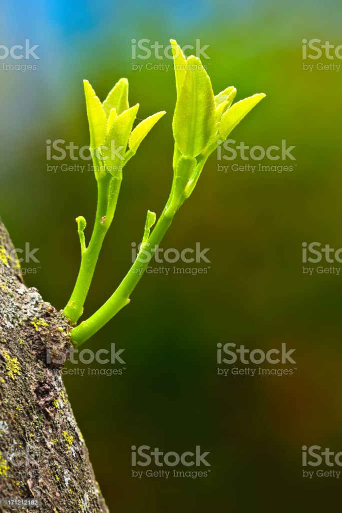 New life. Environmental concept themes stock photo