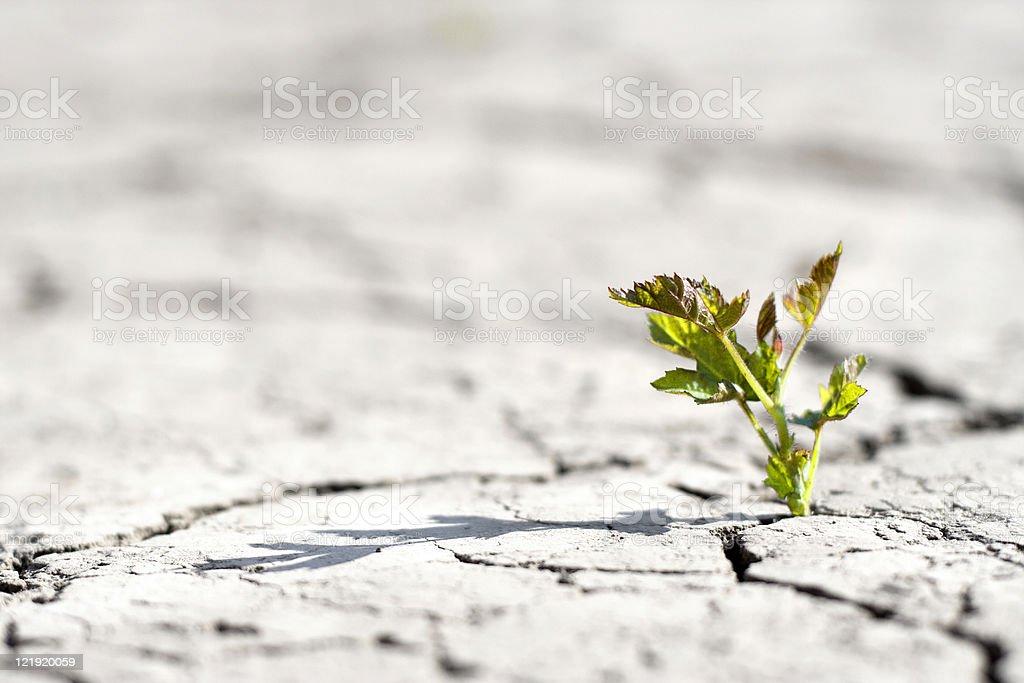 new life - fresh plant in desert stock photo