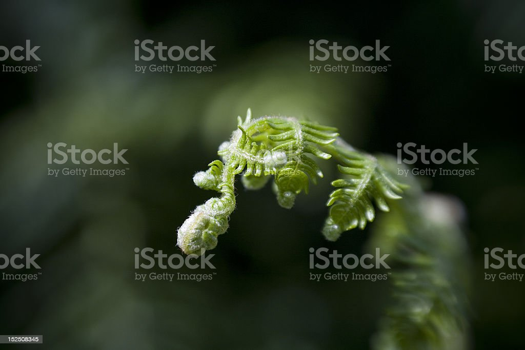 New life from Fern leaf stock photo