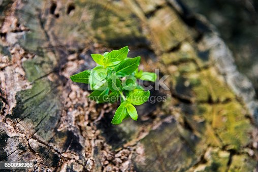 istock New life from old stump 650096966