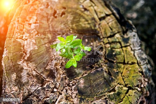 istock New life from old stump 650097078