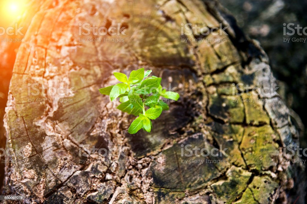 New life from old stump stock photo