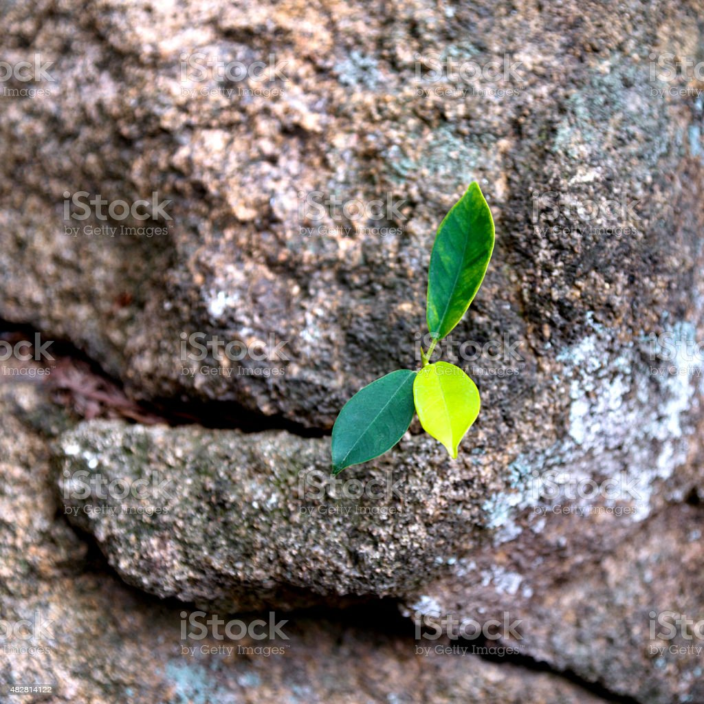 New life from stone stock photo
