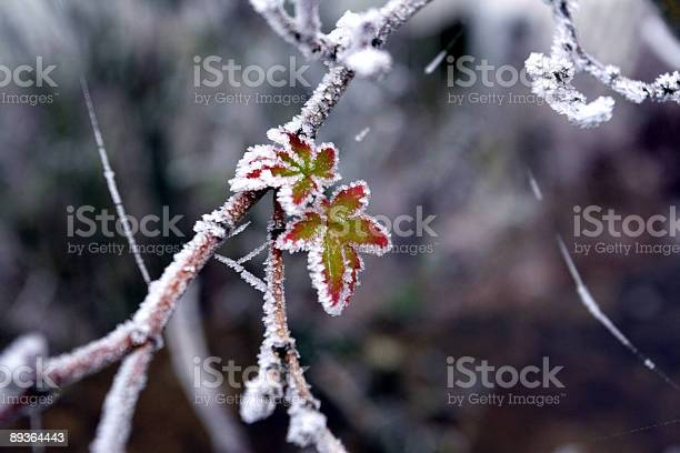 New Life Frosty Stock Photo - Download Image Now