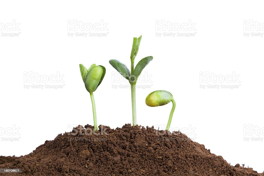 new life growing in spring:love and care stock photo