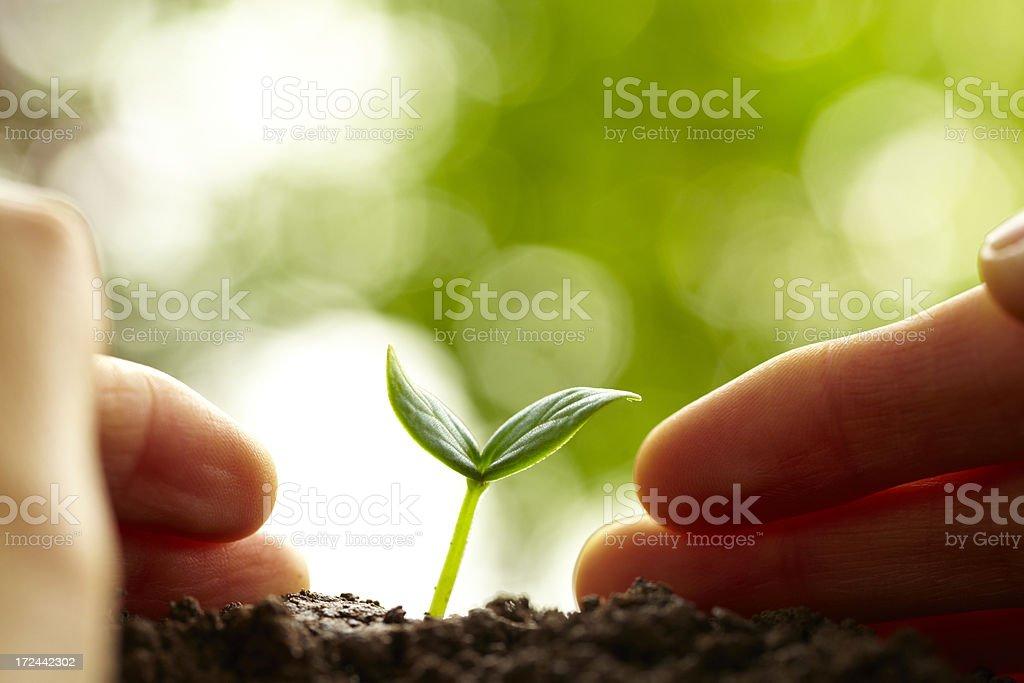 new life growing stock photo