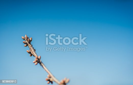 Tree branch buds and the beautiful blue sky.