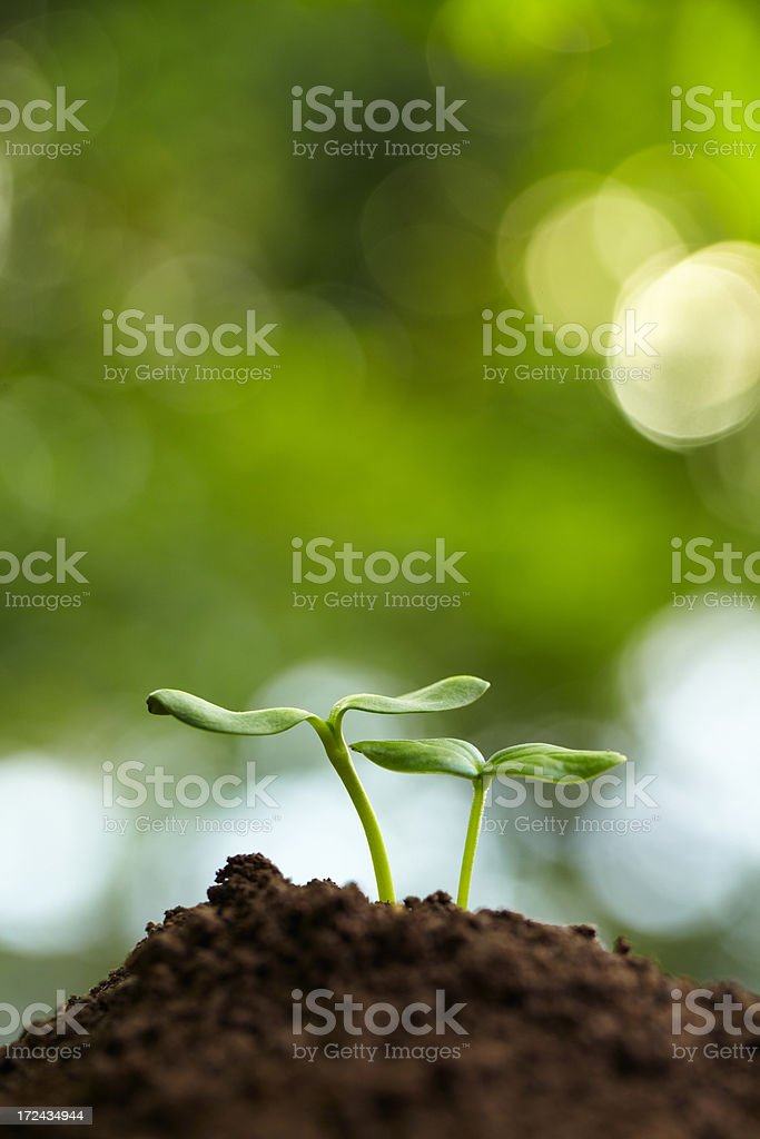 new life growing together stock photo