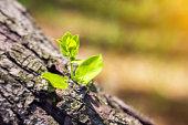 Dead, Seedling, Dead Plant, Plant, New Life