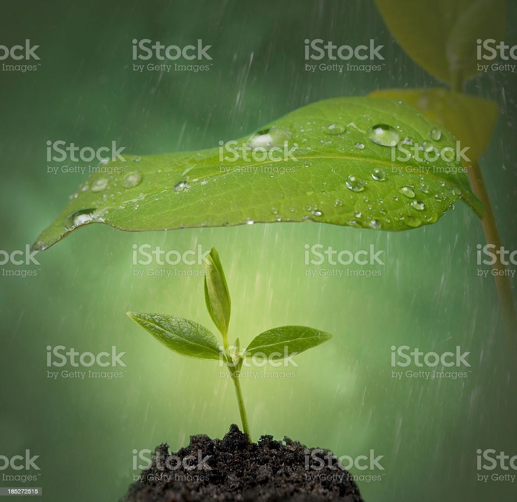 New life help royalty-free stock photo