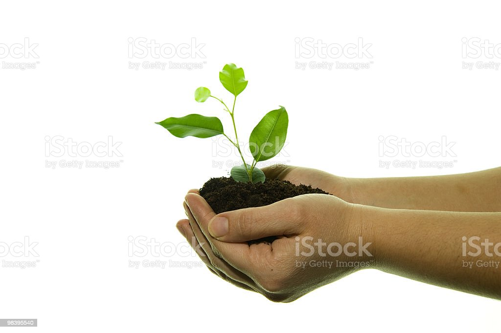 new life in hands royalty-free stock photo
