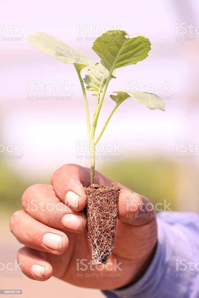 New Life in open Hand royalty-free stock photo