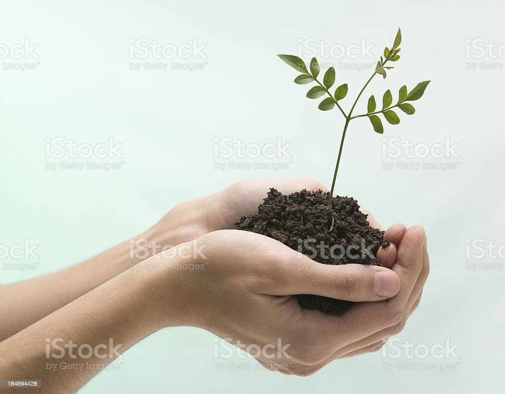 New life in palms royalty-free stock photo