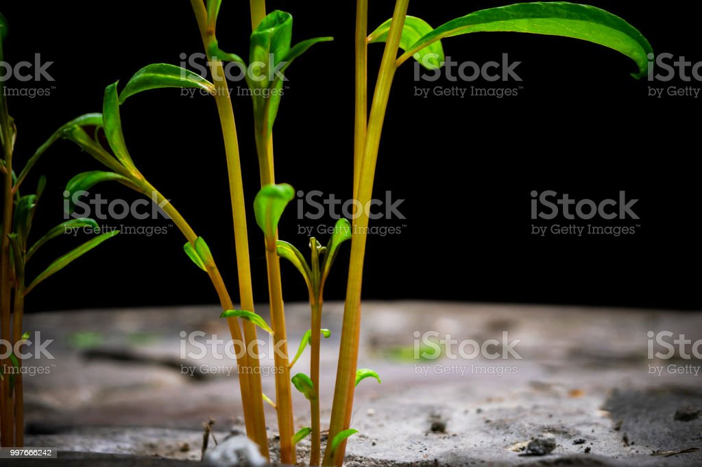 New life in the green world. Green plant growing in arid soil and...