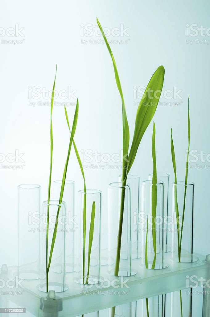New life in the test-tube royalty-free stock photo