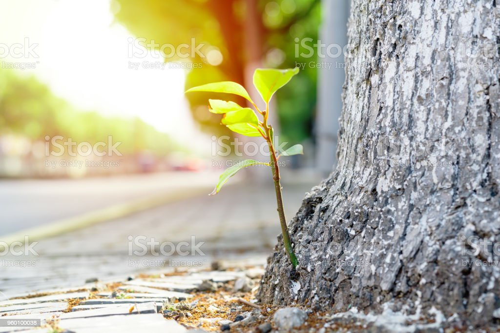 new life, new born green leave growth on the old tree, summer concept stock photo