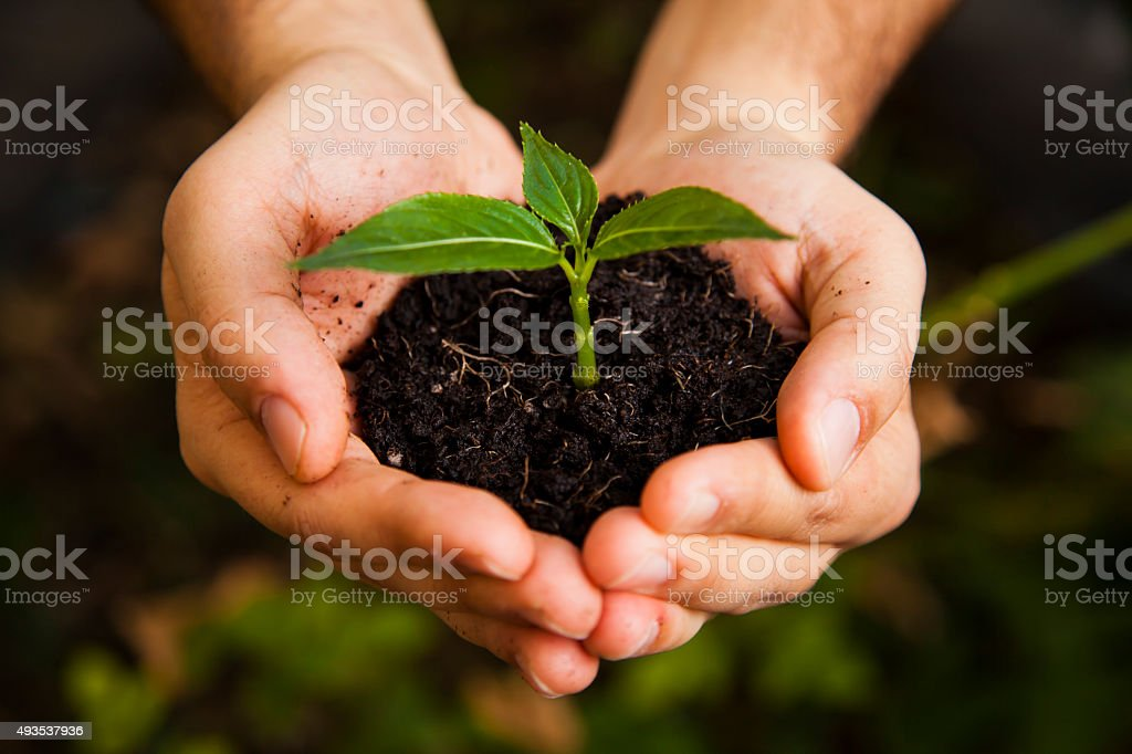 New life on hand stock photo