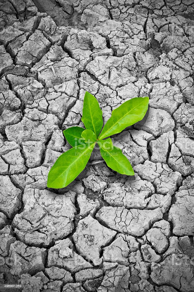 new life on the dry soil cracks stock photo