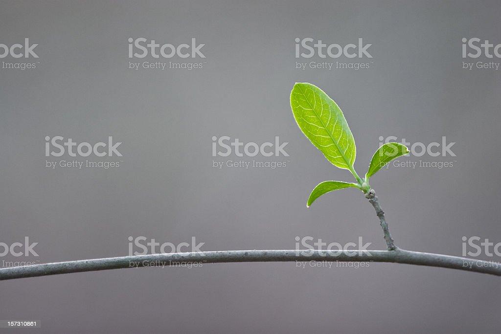 New life royalty-free stock photo